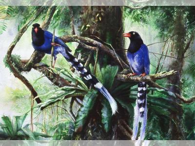 那时,才领悟到喜欢野生动物不应是占有它,因为翱翔在大自然中的动物才